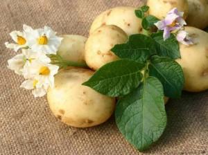 картофель от трещин на пятках